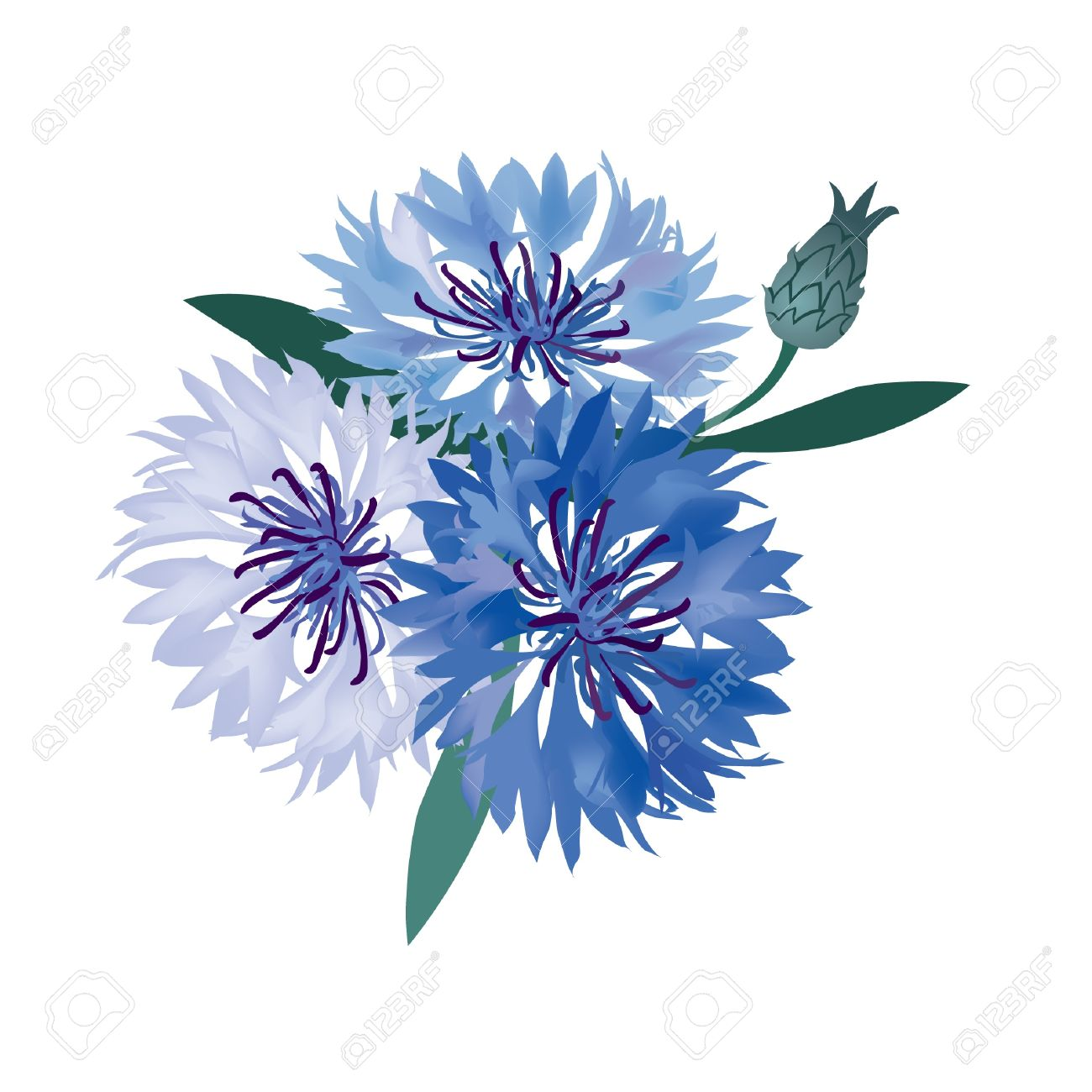 Flower Bouquet Vector Illustration Blue Cornflower Royalty Free.