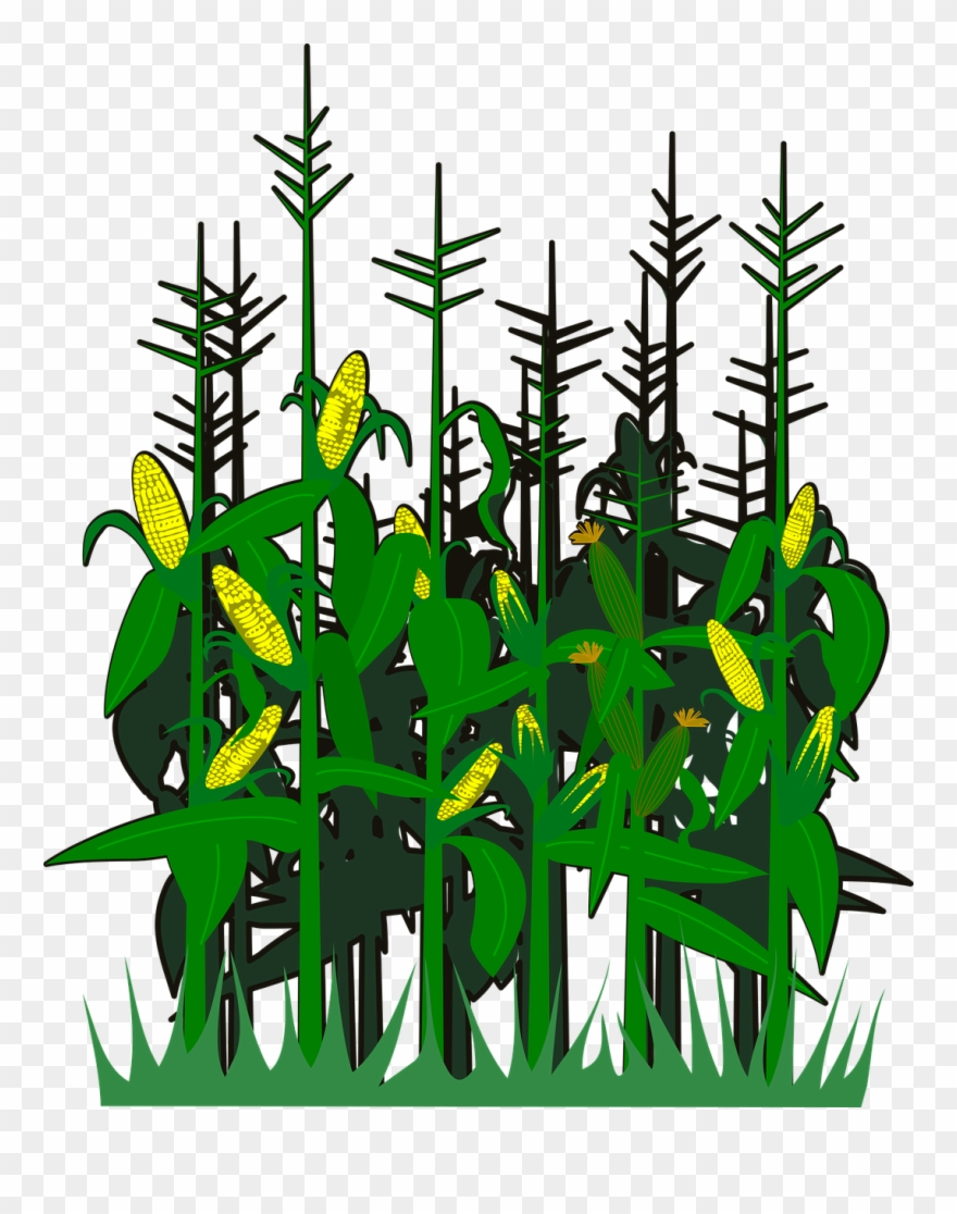 Corn,svg,vector,free Vector Graphics,free Pictures, Clipart.