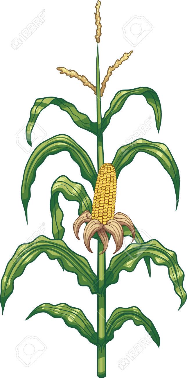 Cartoon Corn Plant. Vector Clip Art Illustration With Simple.