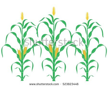 Free clipart of rows of green grass and corn stalks.