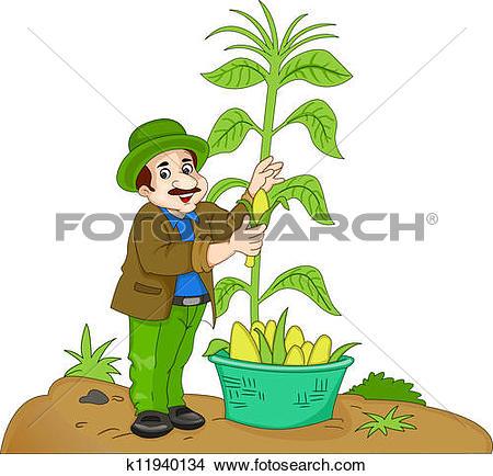 Clipart of Corn on a Cob, illustration k13360882.