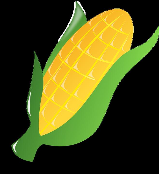 Maize cultivation clipart #4