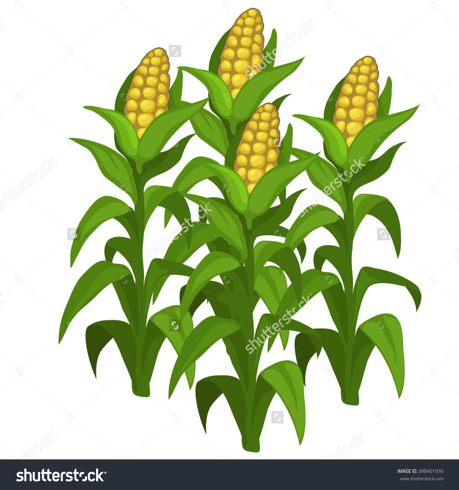 Maize field clipart #3