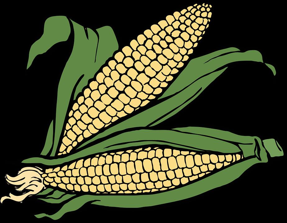 Corn Husk Png & Free Corn Husk.png Transparent Images #18511.