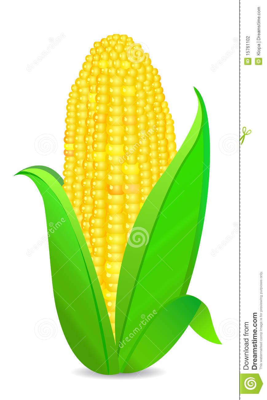 Corn husk clipart.