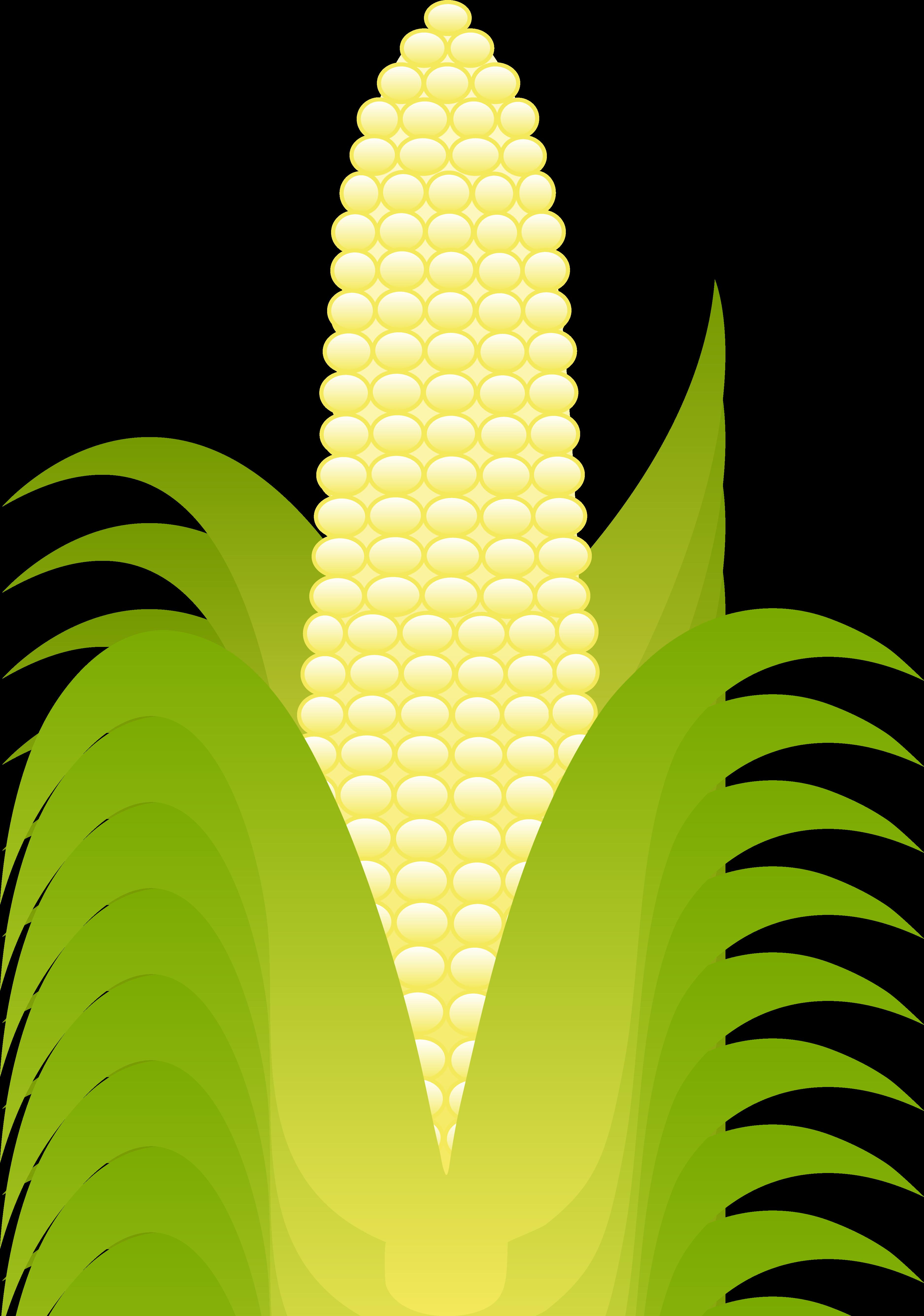 corn leaf clipart clipground corn clip art png corn clip art kids