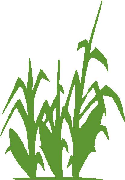 Maize field clipart #8