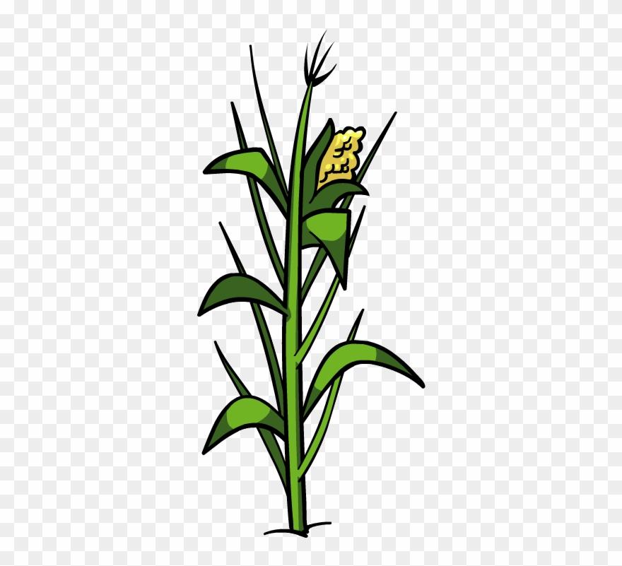 Plant Clipart Corn.