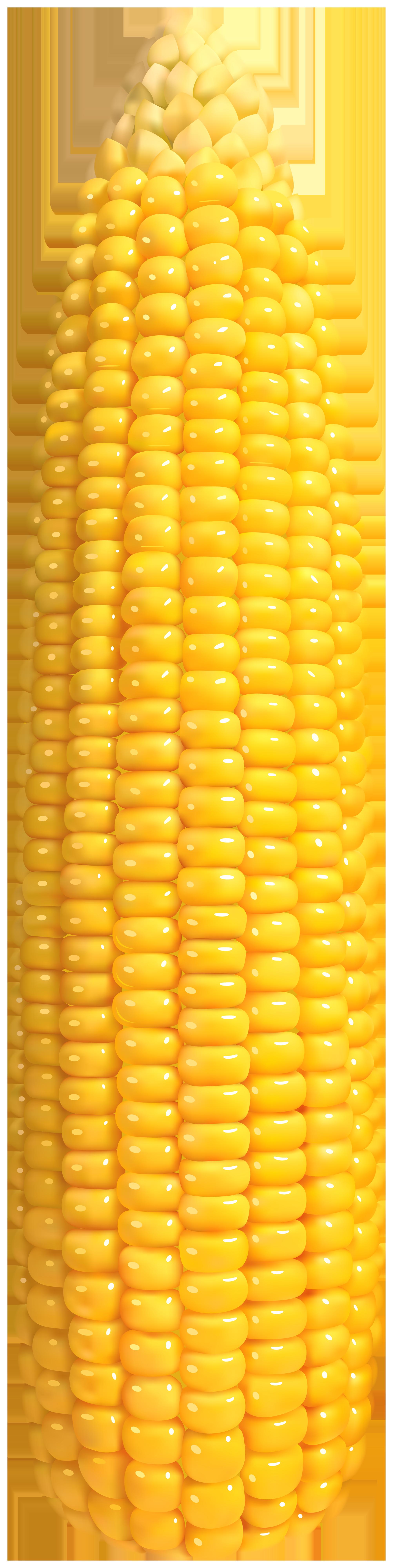 Corn PNG Clip Art.