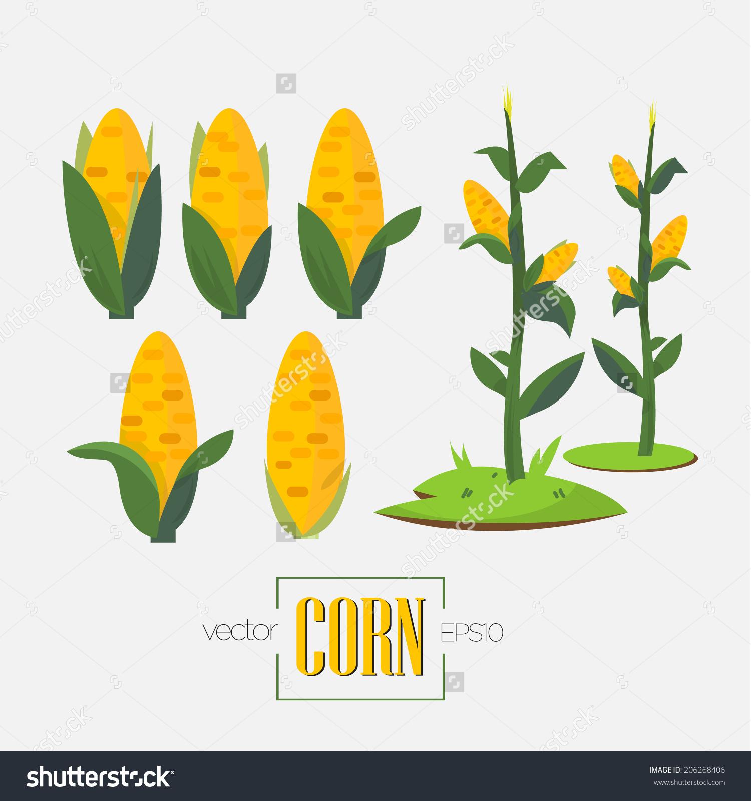 Corns Corn Tree Vector Illustration Stock Vector 206268406.