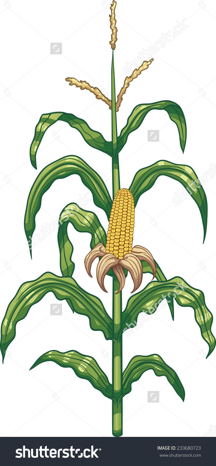 Maize cultivation clipart #12