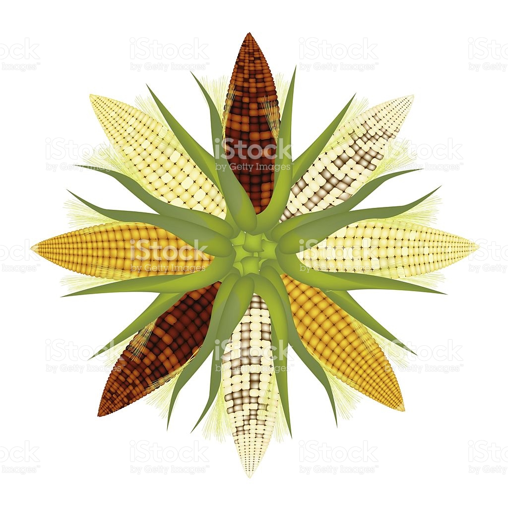 Different Colors Of Corn Forming A Round Shape stock vector art.