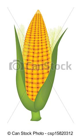 Vector Clip Art of Fresh Sweet Ears of Yellow Corn with Husk and.