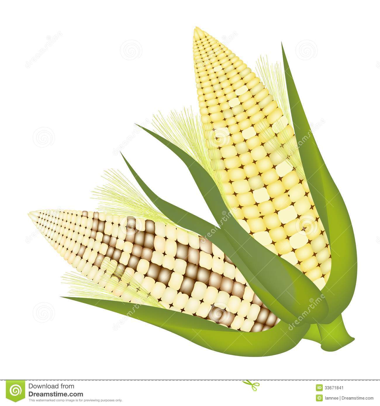 Four Colors Of Fresh Corn With Husk And Silk Stock Image.
