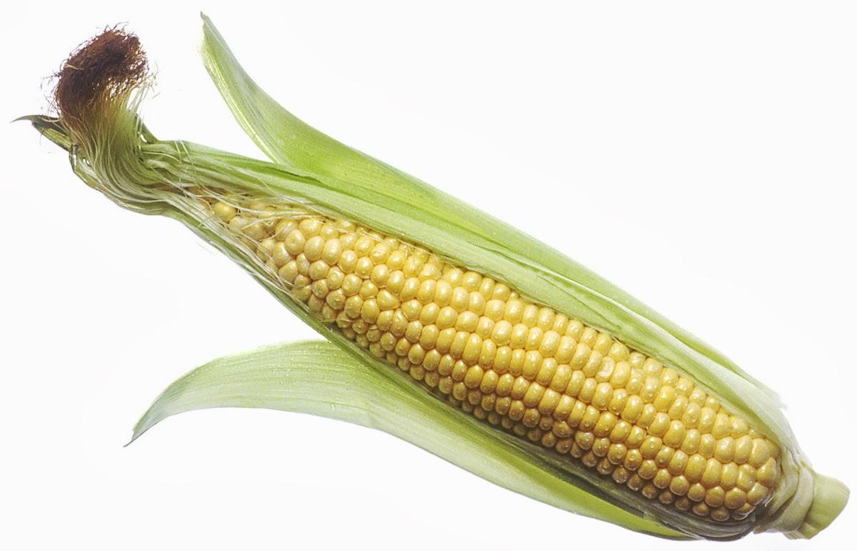 Simple Ayurvedic health tips: Corn silk tea.