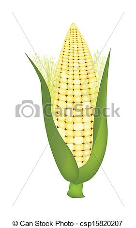 Vector Clipart of Fresh Sweet Ears of Corn with Husk and Silk.