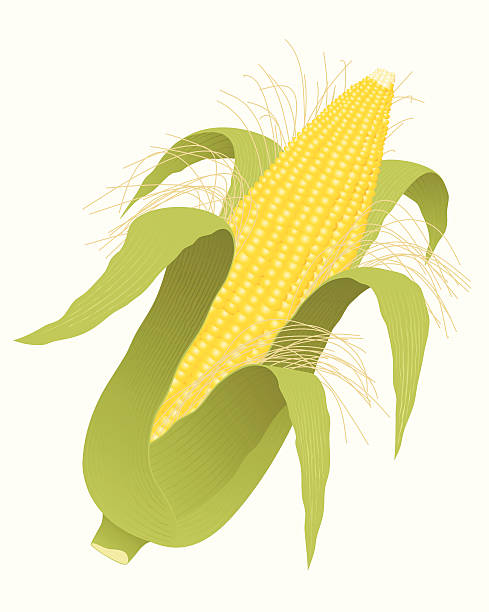 Corn Silk Clip Art, Vector Images & Illustrations.