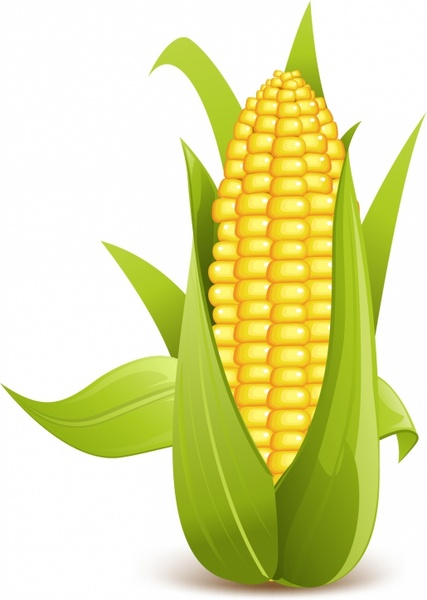 Corn stalk silhouette free vector download (5,252 Free vector) for.