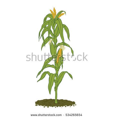 corn stalk silhouette clipart free clipground