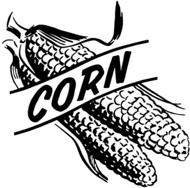 Whole corn free vector download (156 Free vector) for commercial.