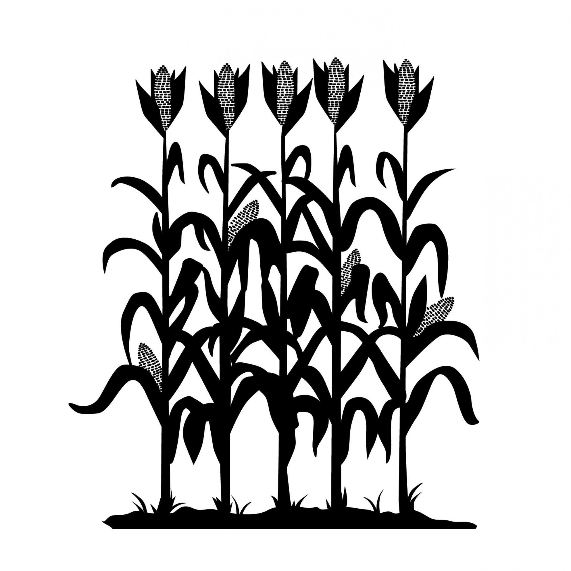 Excellent Corn Plant Silhouette Clip Art Picture.
