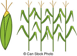 Corn Clipart and Stock Illustrations. 133,814 Corn vector EPS.