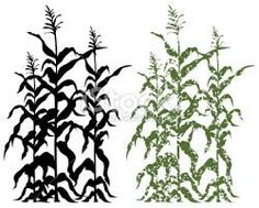 Corn stalk clipart black and white.