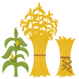 Corn stalk bundle clipart cute.