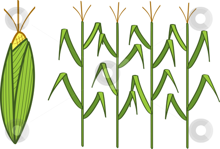 Maize field clipart #12