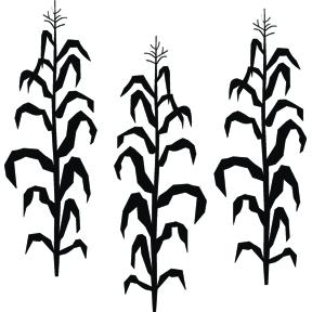Corn stalks clipart - ...