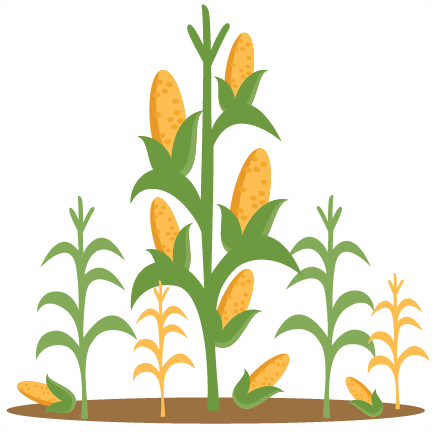 Corn stalk bundle clipart.