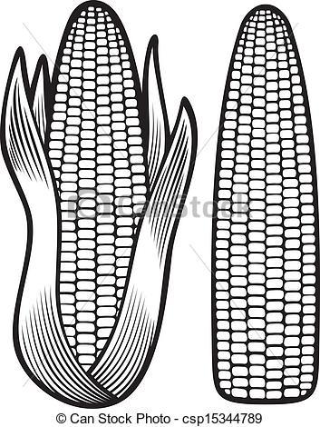 Vector of corn (corncob, corncob with leaves) csp15344789.