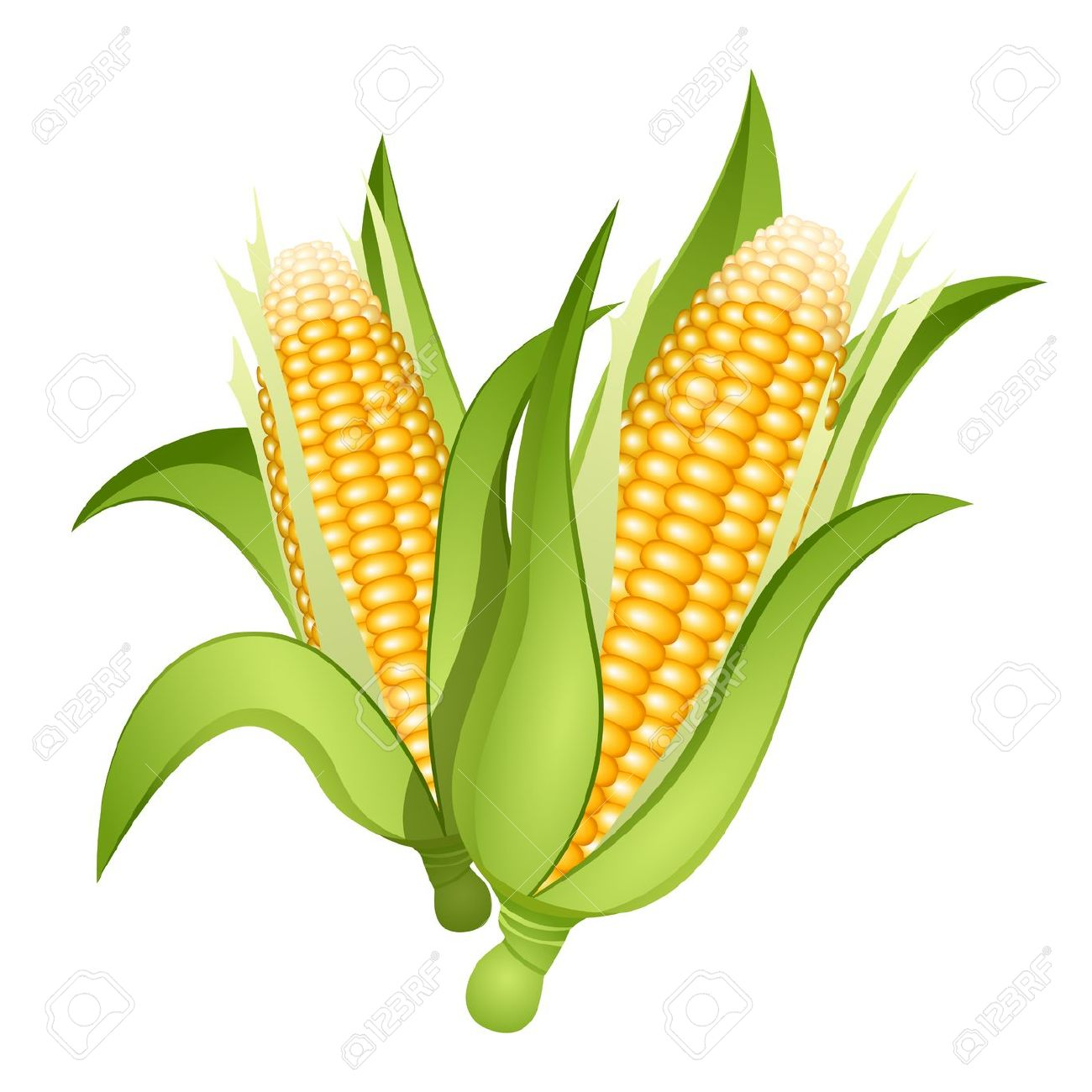 Two Ears Of Corn Isolated Royalty Free Cliparts, Vectors, And.