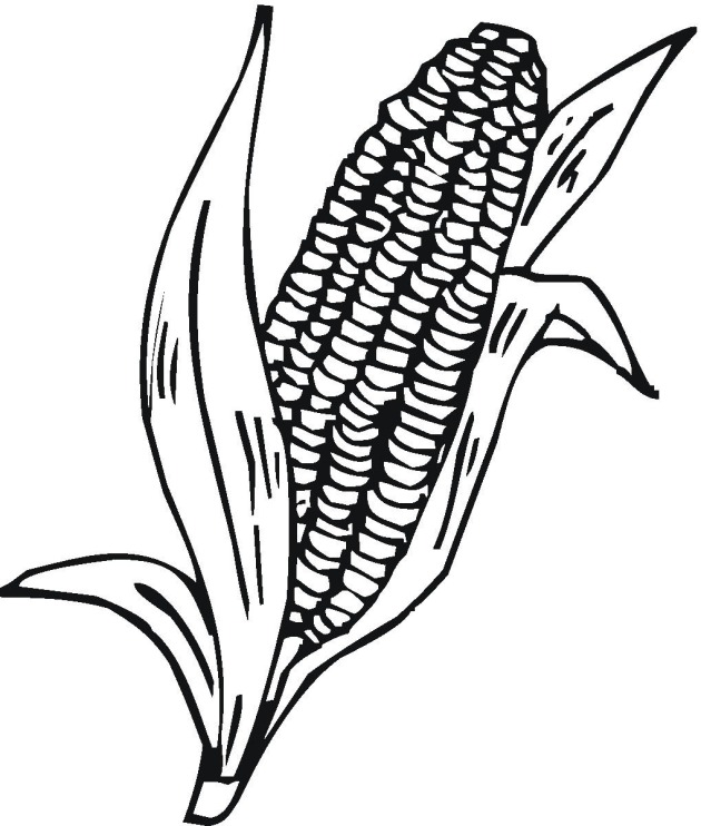 Corn Cob Pictures.
