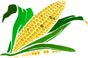 Maize clipart #1