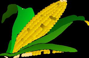 Maize clipart #1