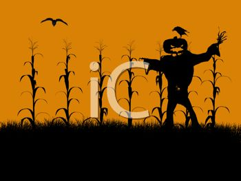 Halloween Background of a Cornfield with a Scarecrow.