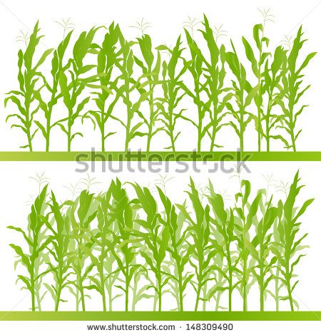 Corn Plant Stock Images, Royalty.