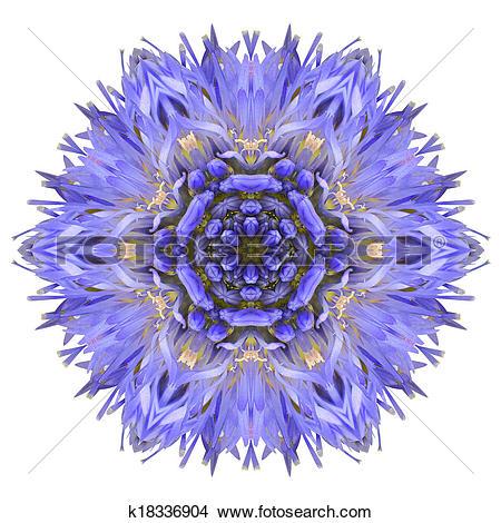 Clipart of Flowers blue cornflower. Vector illustration. k6781075.