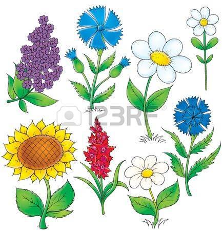 95 Lilac Cornflowers Stock Vector Illustration And Royalty Free.