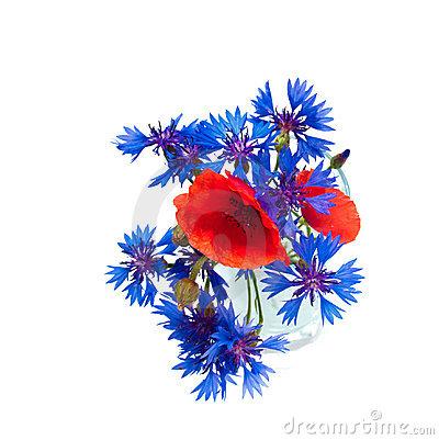 Poppy And Cornflower Stock Illustration.