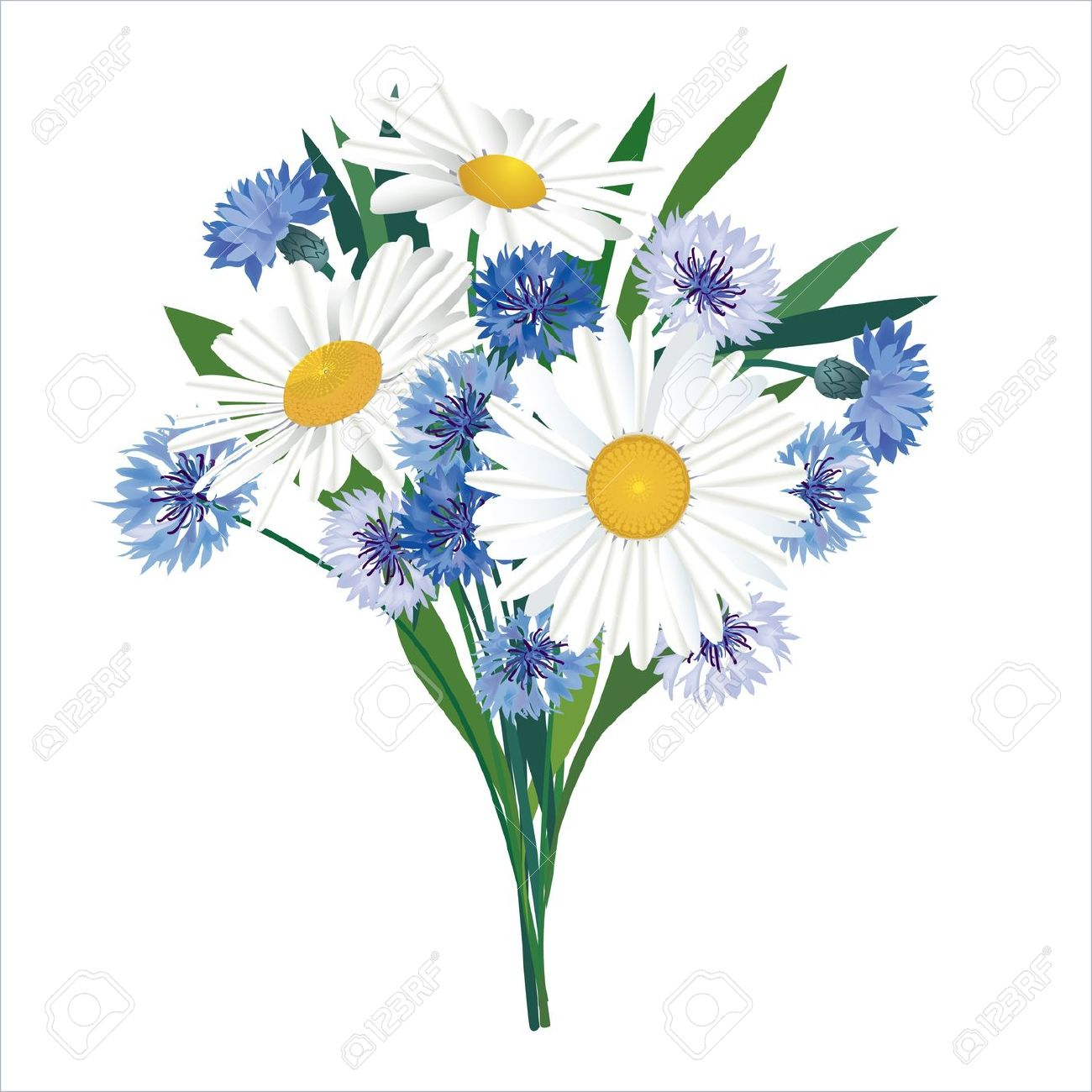 Flower Bouquet Isolated Chamomiles And Cornflowers Royalty Free.