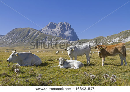 Cattle Point Stock Photos, Images, & Pictures.