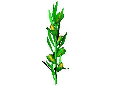Animated corn stalks.