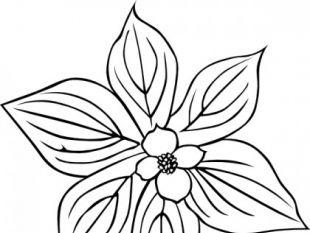 GG cornus canadensis.