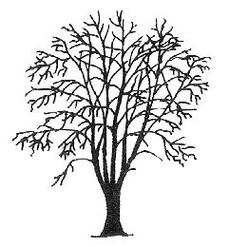 Rogers Trees And Shrubs Cornus Controversa Tree Clipart.