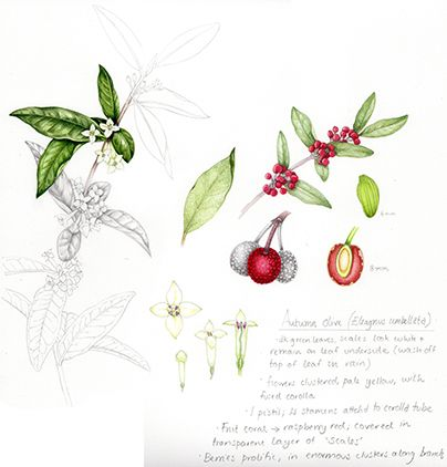 1000+ images about Contemporary Botanical Art on Pinterest.