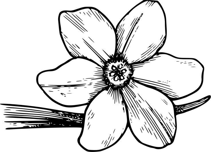 1000+ ideas about Free Clip Art Flowers on Pinterest.