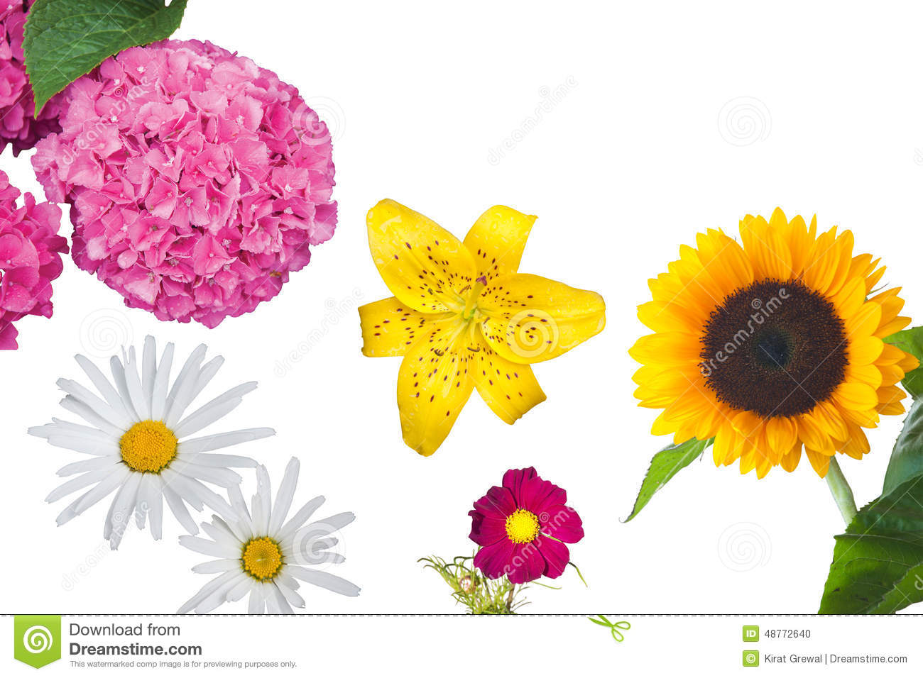 Hydrangea, Daisies, A Yellow Tiger Lily, A Magenta Anemone.