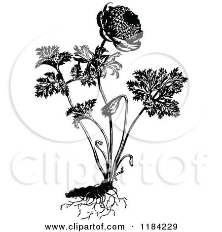 Royalty Free Botany Illustrations by Prawny Vintage Page 1.